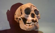 18,000 years ago, the remote Indonesian island of Flores was home to a population of tiny humans. They stood only about 3.5 feet tall on their large feet, and their skulls housed unusually small brains approximately the size of a grapefruit. The identity of these 'hobbits' has been hotly debated for years: Were they modern humans suffering a disease, or a new species, Homo floresiensis?