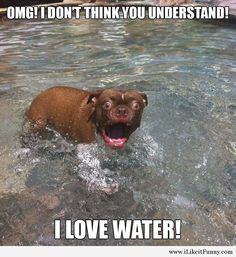 This dog love the water my friends