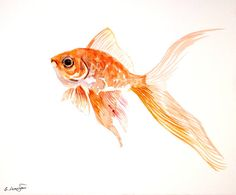 Goldfish Watercolor Paintings | goldfish, original watercolor painting, 8 X 10, landscape