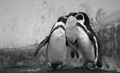 May have stolen this but I love it! Penguins @ Longleat ❤️