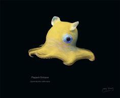 Illustration of a Flapjack Octopus. Weird Sea Creatures, Ocean Creatures, Beautiful Creatures, Underwater Creatures, Underwater Life, Dumbo Octopus, Octopus Art, Flapjack Octopus, Octopus Photography