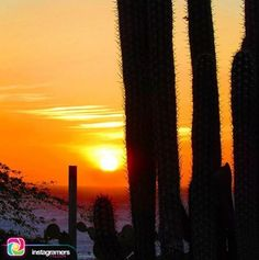 @victorpalmitesta nos comparte esta hermosa imagen Usando: #IgersFalcon . .  Ocaso mar cardones... Atardecer Falconiano . .  #instapic #picoftheday #photooftheday #igersvenezuela  #photo #sunrise  #instagood #sunset #falcon #venezuela #sky #igersfalcon #puntofijoguia #paraguana #clouds #venezuelahermosa