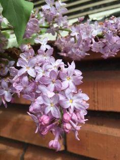 vardagens guldkorn: Blomsterfägring i trädgården
