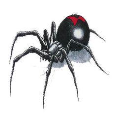68 Best Spider Tattoo Images Spider Tattoo Spider Tattoos