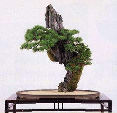Bonsai - (amazing, the roots must be in the wood base instead of the actual pot)