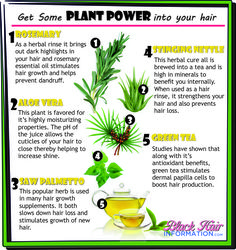 Get some plant power into your regimen http://www.blackhairinformation.com/our-newsletters/postcard-tips/get-some-plant-power-into-your-hair-bhi-postcard-tips/
