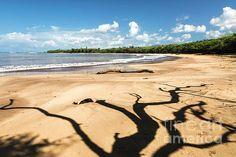 Tree casting an interesting shadow on a beach Kauai beach in Hawaii Hawaii Landscape, Kauai, Hawaiian, Wall Art, Beach, Water, Outdoor, Gripe Water, Outdoors
