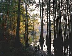 Caddo Lake State Park by Richard Reynolds
