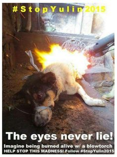 Yulin : Stop Fucking Dog Festival. Burning poor animals alive is horrible. One Day Yulin will feel the same pain of burning Jeremy Wade, Save Animals, Animals And Pets, Stop Animal Cruelty, Hate People, Horrible People, Evil People, Faith In Humanity, Animal Welfare