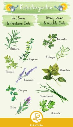 Create a herb bed: location, variety selection and instructions. Fresh herbs all year round - no problem with an herb bed. We show you what you should consider when creating an herb garden. Herb Garden, Vegetable Garden, Garden Art, Garden Design, Strawberry Planters, Plants Are Friends, Gardening For Beginners, Wedding Humor, Kraut