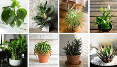 20 perfect bathroom plants that grow with little / no light - - Calathea, Plante Zz, Decoration Plante, Bathroom Plants, Simple, Perfect Plants, Light Bathroom, Minute, Chicago