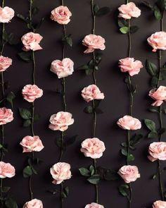 flowers background | Tumblr