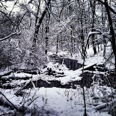 @Annabelle Whitcomb Words can't describe how pretty it was on the nature trail today #vfcc #vfccseasons