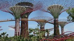 Another trip on the todo list!   Gardens by the Bay is Singapore's New Super Park