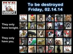 ((SUPER URGENT)) *TO BE DESTROYED ON VALENTINE'S DAY FRI. 2/14/14* They ONLY have tonight left to live. Click on link to see all these dogs https://www.facebook.com/media/set/?set=a.611290788883804.1073741851.152876678058553&type=3