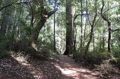 Redwood Creek Canyon