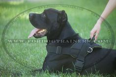 Lightweight Adjustable Nylon Canine Harness for Pulling, Walking and Training - $29.90 | www.fordogtrainers.com
