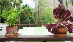 Vegetable Gardening Indoors: Starting A Vegetable Garden Indoors - You can grow most vegetables in containers in your home successfully. But how do you go about vegetable gardening indoors? Learn more about growing indoor vegetables year round and the best vegetables to grow in this article.