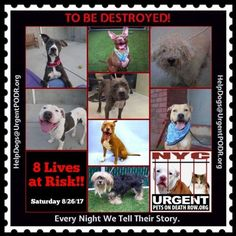 TO BE DESTROYED 08/26/17 - - Info   To rescue a Death Row Dog, Please read this:http://information.urgentpodr.org/adoption-info-and-list-of-rescues/  To view the full album, please click here:http://nycdogs.urgentpodr.org/tbd-dogs-page/ -  Click for info & Current Status: http://nycdogs.urgentpodr.org/to-be-destroyed-4915/
