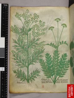 Miniatures of plants.   Origin:Italy, N. (Lombardy)