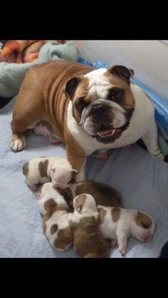 "Look at this proud mama! www.bullymake.com <<< She looks so happy!! Like, ""Look what I made!!"""