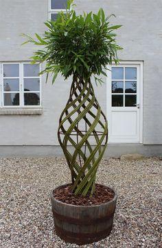 Most Beautiful Gardens, Amazing Gardens, Tropical Greenhouses, Living Willow, Willow Garden, Sweet Home Design, Pergola, Japan Garden, Willow Weaving