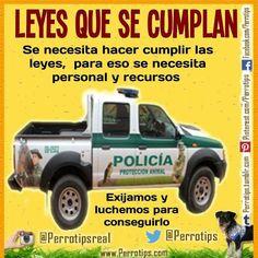 La protección animal no debe ser letra muerta.  Que asignen recursos y mejoren las leyes #perrotips