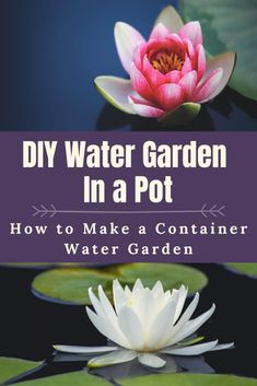 Container water gardens can be step on your porch, patio, or even the deck. I set this water garden up in a few steps and have gotten to enjoy it for years. Water Garden Plants, Container Water Gardens, Container Pond, Indoor Garden, Wine Barrel Planter, Lily Garden, Garden Art, Garden Design, Water Pond