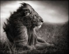 Nick Brandt - ACROSS THE RAVAGED LAND - Expositions et photographies - A Galerie