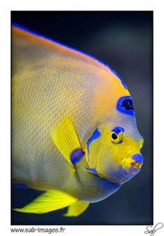 At the Paris aquarium