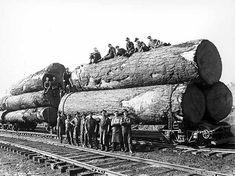 Loaded Logging Flat Beds