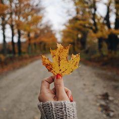 Pics to take - Fall - Autumn - September - October - November - Hike - Leaf - Outside - Nature