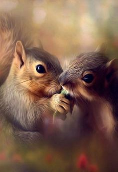 Animals And Pets, Baby Animals, Funny Animals, Cute Animals, Squirrel Pictures, Animal Pictures, Cute Squirrel, Squirrels, Happy Squirrel