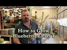 How to grow Blueberry Bushes Part 1 - Basic Blueberry Plant Information Planting In Sandy Soil, Planting In Clay, Blueberries For Sal, Growing Blueberries, Blueberry Plant, Blueberry Bushes, Home Vegetable Garden, Fruit Garden, Miniature Fruit Trees