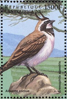 Horned Lark stamps - mainly images - gallery format