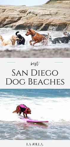 A local's guide to dog-friendly beaches in San Diego County. Where to go (legally) for on-leash and off-leash fun, rules, and more tips. Get all the details here at La Jolla Mom