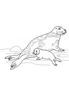 Gray Seal Mother And Baby Coloring Page