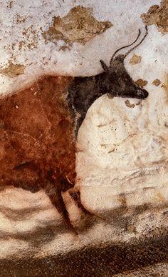 Vache rouge à tête noir paroi gauche du diverticule axial