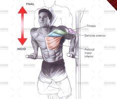 Paralela - Tudo sobre esse exercício para peito! Ilustrações, como executar passo a passo, músculos envolvidos, variações, e mais!