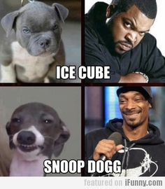 Ice Cube & Snoop Dogg (second dog is Kermit Jenna marbles dog :P)
