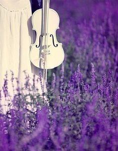 violin in the lavender fields