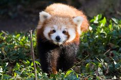 """Not that you need to — you always look great to me."" 
