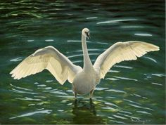 "swan paintings | Trumpeter Swan"" oil painting of a swan standing in water with wings ..."