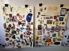 Tales From a K-1 Classroom: science; living non-living things