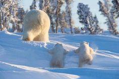 1048 best winter wonderland images winter scenes winter. Black Bedroom Furniture Sets. Home Design Ideas
