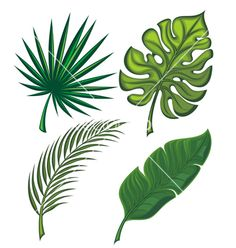 Tropical leaves vector 1983500 - by galina on VectorStock®