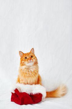 Cute ginger cat in Santa's hat. by Aksenov_K on @creativemarket