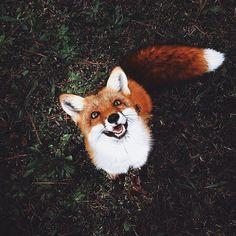 Imagen de fox
