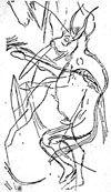 Horned Shaman (dancing sorcerer of Trois Freres)