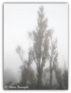 https://flic.kr/p/aBu5yV | Arbre dans le brouillard matinal de novembre